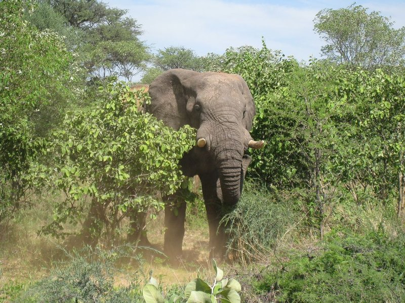 large_94Botswana_G..24x768_.jpg