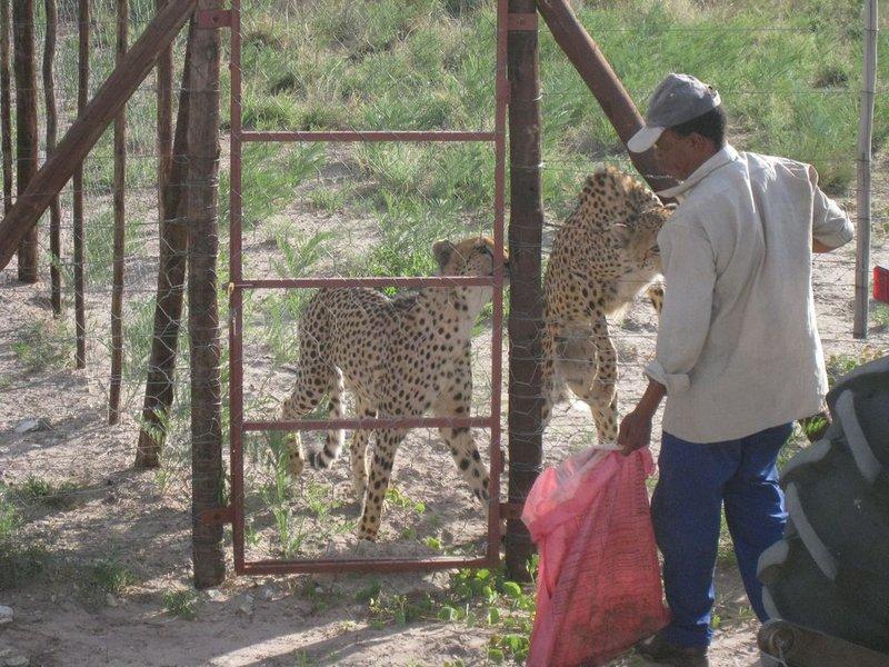 large_Botswana_G..24x768_.jpg