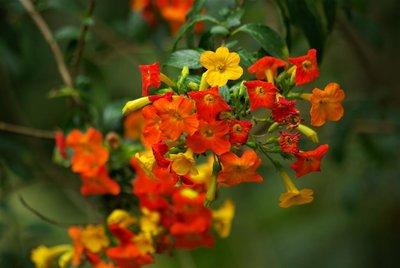 Monteverde - (15)