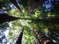 Redwood circle