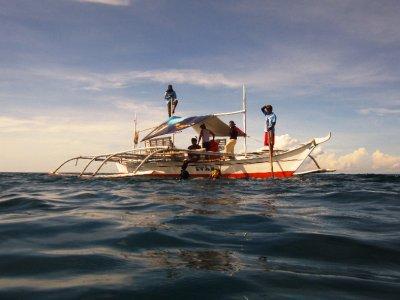 Auf der Suche nach den Walhaien