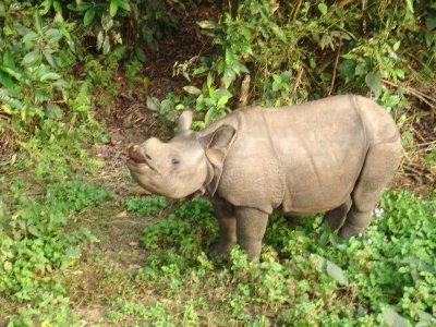 sniff_rhino.jpg