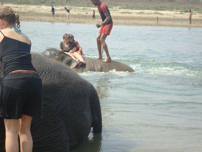 capsizing elephant