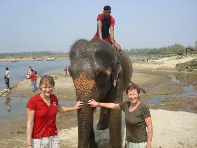 A clean elephant