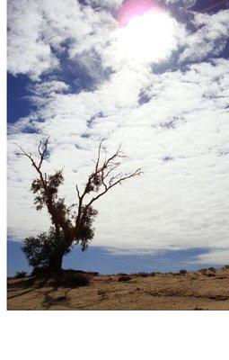 outbackBaum1.jpg