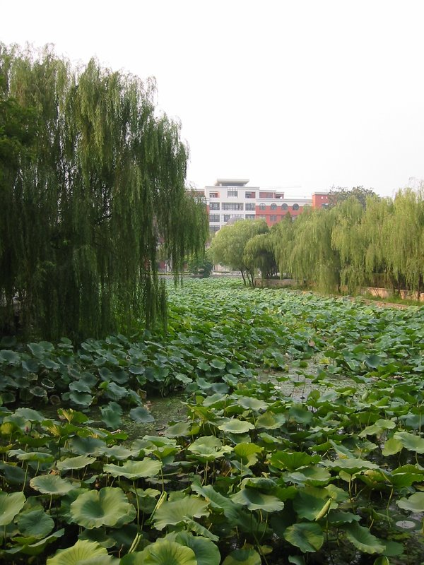 Nankai University Lilly Pads