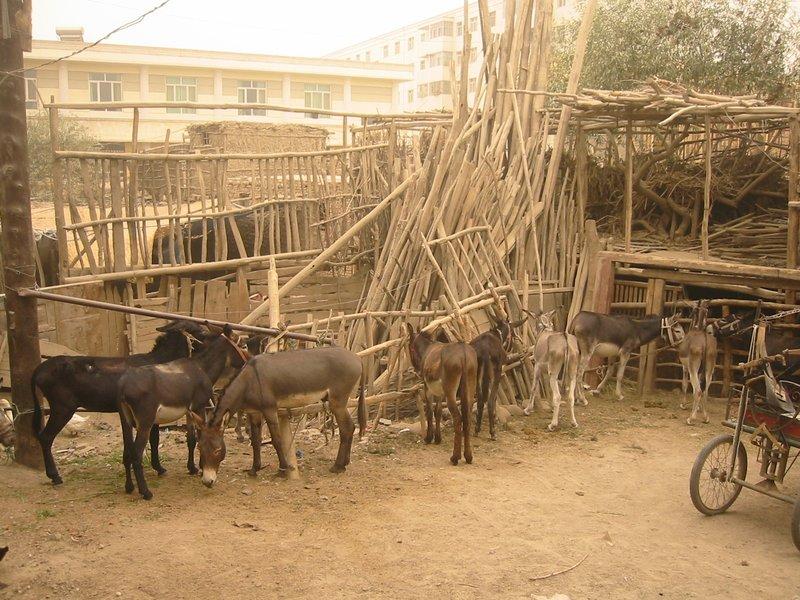 Donkey Cart Parking, Hotan Sunday Market