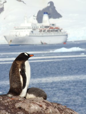 Penguin with Ship