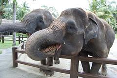 bali_elephant.jpg