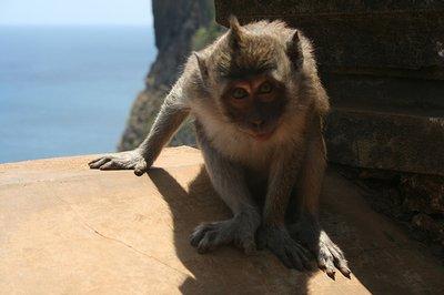 bali_monkey.jpg