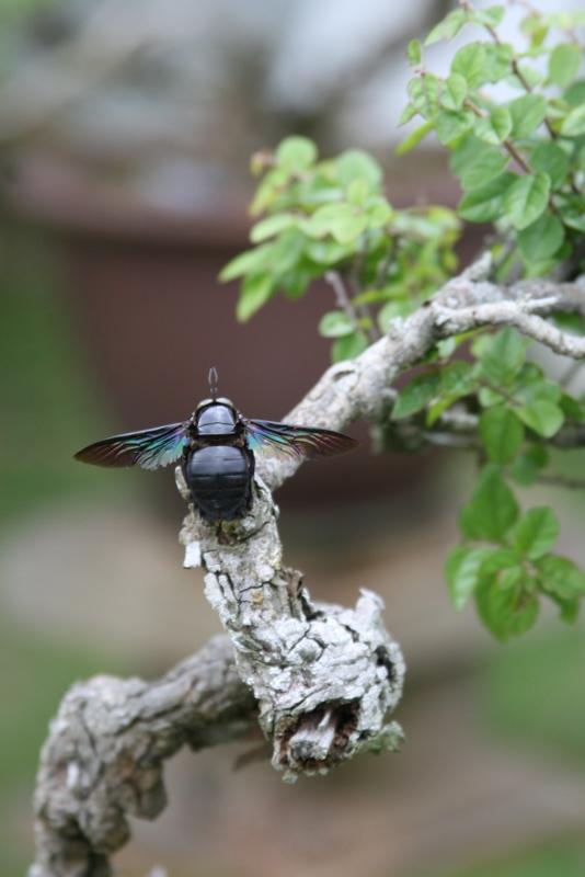 Bonzai Bug