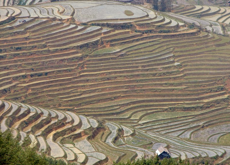 Terraces in Sapa valley 2
