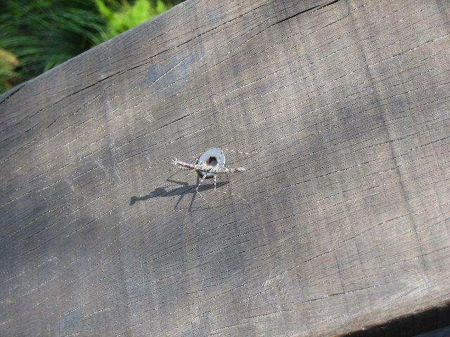 Fraser Island: Praying Mantis