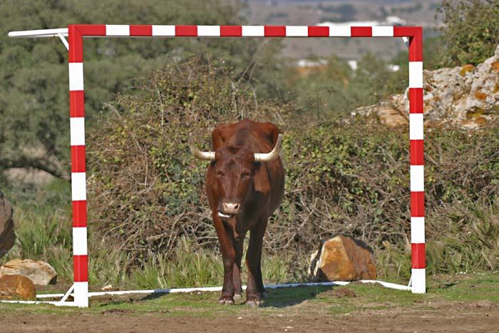Cow-in-Goals