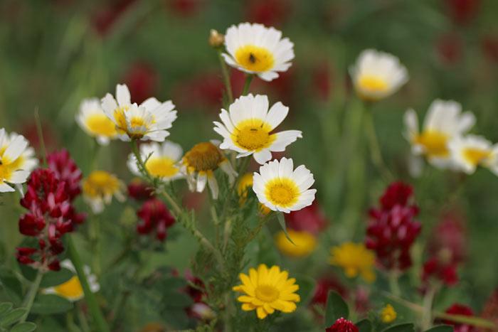 Spring-Flowers-Cadiz province Andalucia, Spain