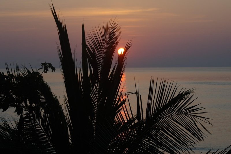 sunrise behind palms