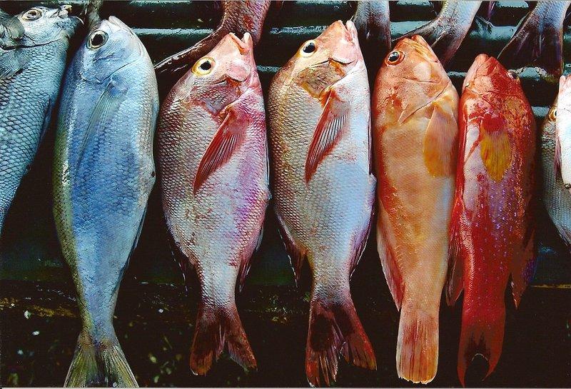 large_fish0003.jpg