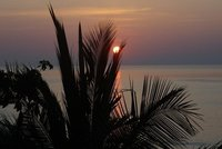 sunrise behind palms