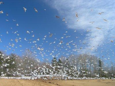 Gulls_and_Clouds.jpg