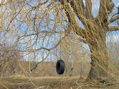 tire_and_willow.jpg