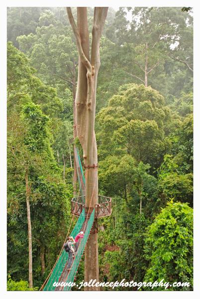 Canopy Walk Danum Valley