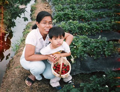 strawberryfields2.jpg