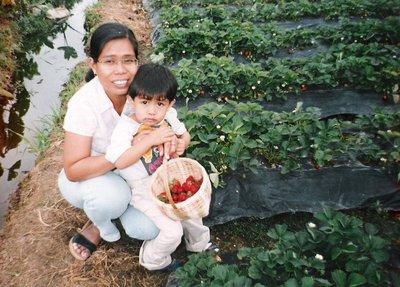 strawberryfields3.jpg