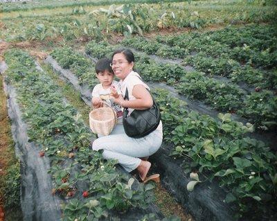 strawberryfields5.jpg