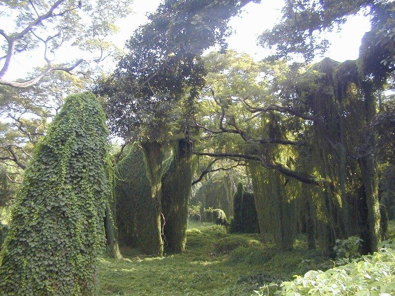 Pisaje del Bosque de la Habana