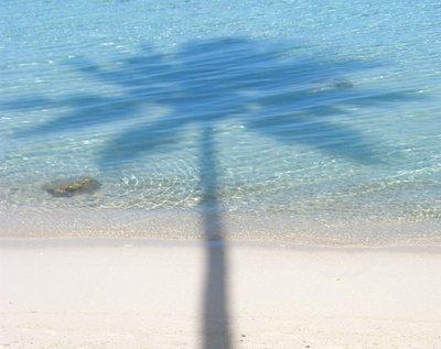 Palm shadow in aqua lagoon