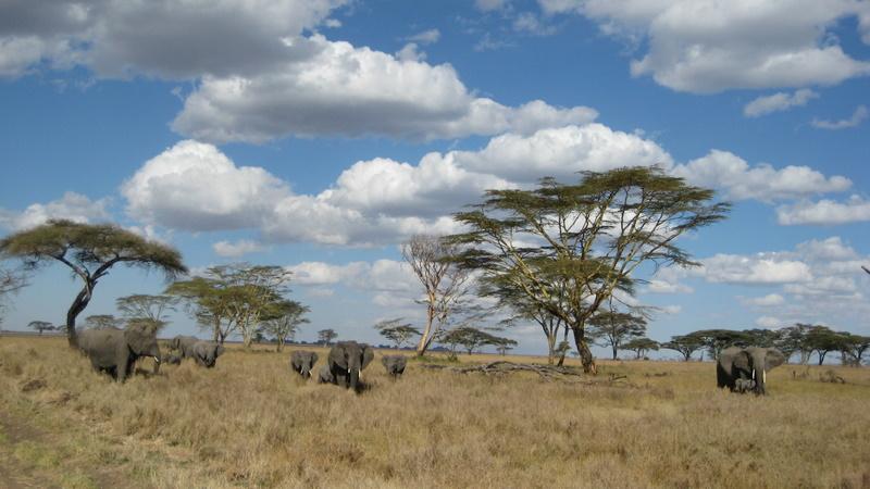 IMG_6297_Tanzania_Safari_Serengeti elephants