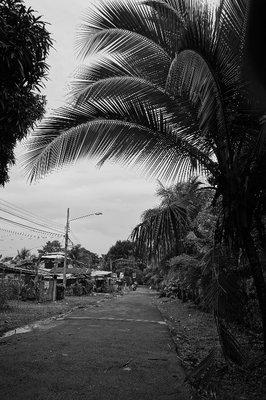 Palm tree in street