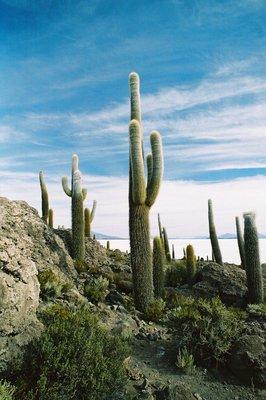 1_Cactus_I..Bolivia.jpg