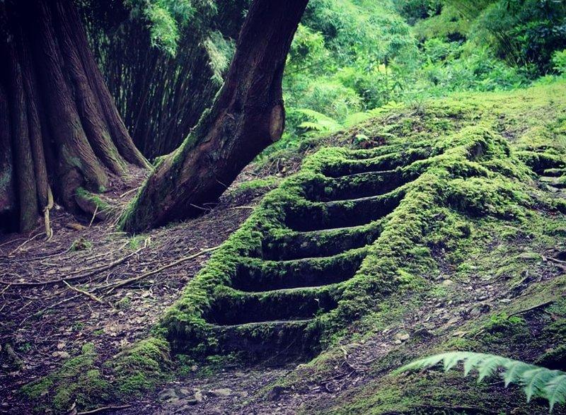 Emerald Isle Steps