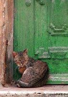 Green Door, What's That Secret You're Keeping?