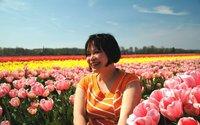 Field of tulips in Lisse