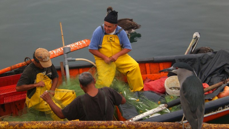 fishermen after an early catch