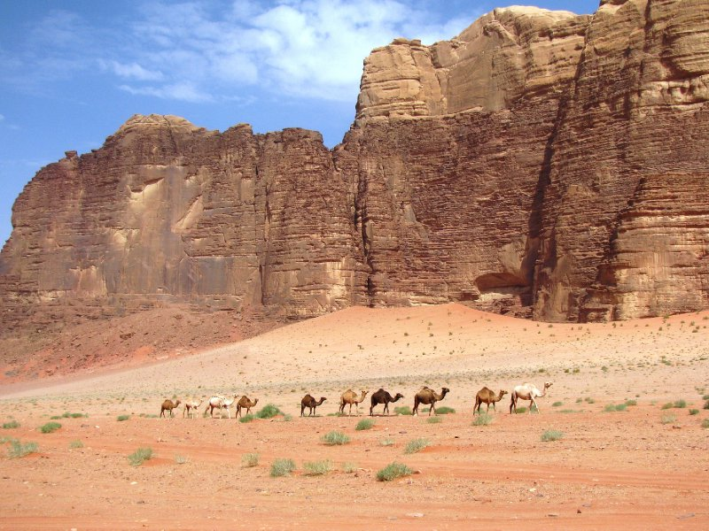 Wady Rum camels