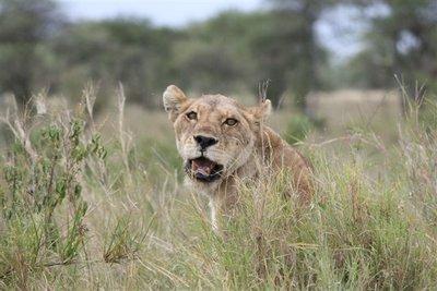 Tanzania_190.jpg