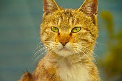 111_cat2
