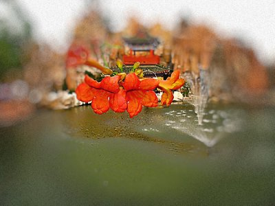 Flower with pond as backdrop