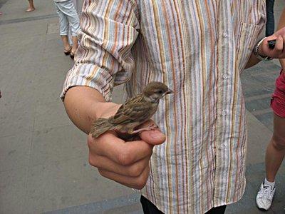 Disoriented-Bird-2-50.jpg