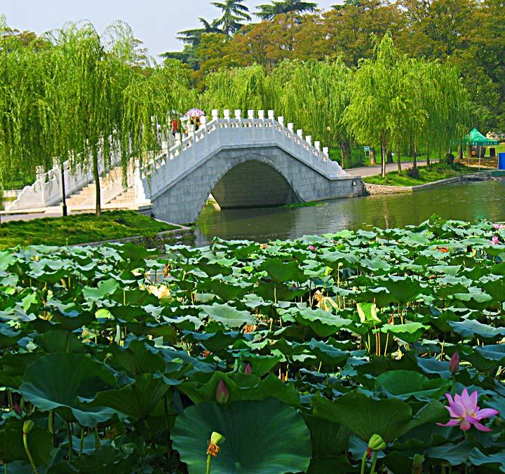 WEL Bridge with lotus
