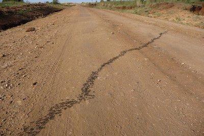 Kenya_Blac..he_Road.jpg