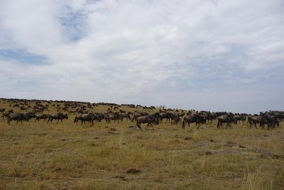 Kenya_Migration.jpg