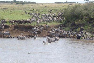 Kenya_Zebr..th_Croc.jpg