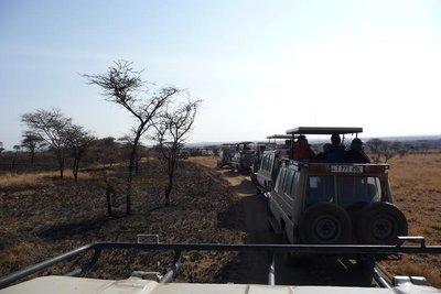 TZ_Trucks_..leopard.jpg