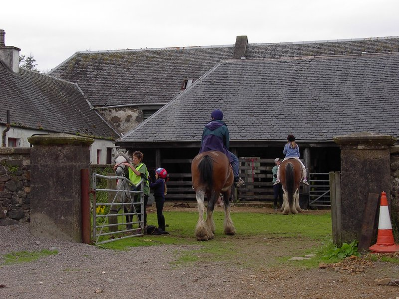 The Clydesdales at the Old Farm