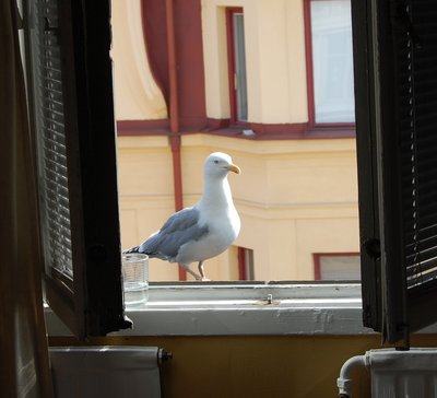 4small28_Seagull_2.jpg
