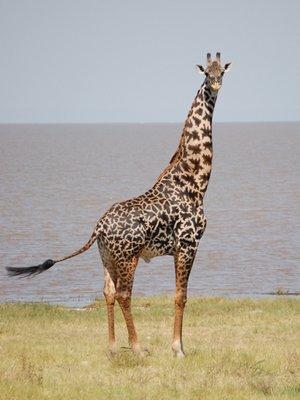 Africa_Sma..he_lake.jpg